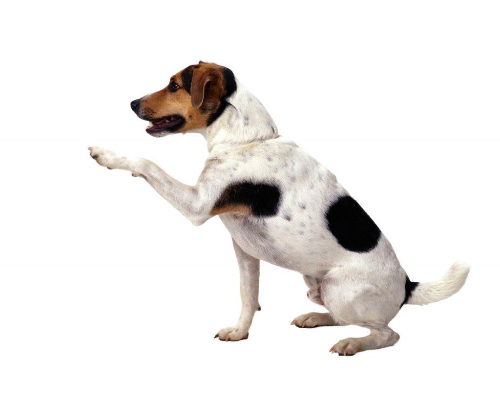 dog-1383342-1920x1536